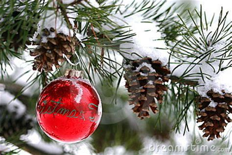 red christmas decoration  snow covered pine tree