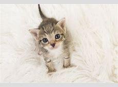 Cómo cuidar a un gato bebé Mis animales