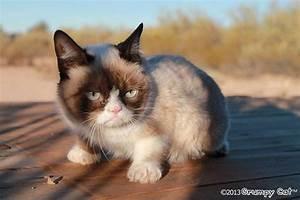 Grumpy Cat - Grumpy Cat Picture