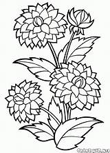 Coloring Peonies Flower Flowers Printable sketch template