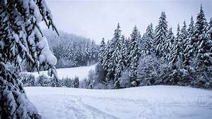 Winter Forest Snowy · Free photo on Pixabay