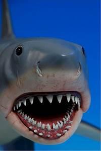Jaws Mechanical Shark Toy   www.pixshark.com - Images ...