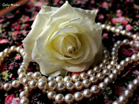 flower white rose petals cloth pearl hd wallpaper