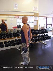 Muscle Building Plan  Thursday Forearms Exercise Guide
