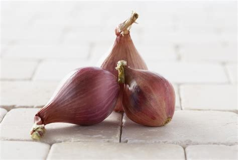 what are shallots shallots and onions are they the same thing