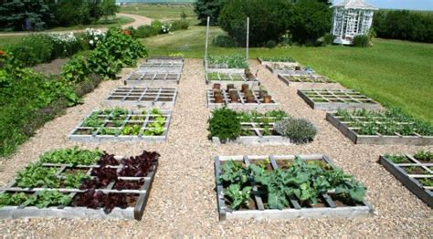 Square Foot Gardening — Colourful Palate