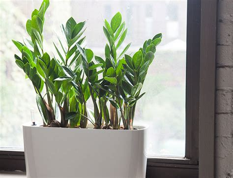 best small indoor plants low light 10 best indoor plants for men gear patrol