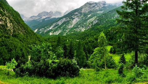 Bovec mountains switzerland greens forest wallpaper