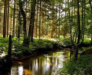 WALDWISSEN  Ökosystem Wald  Was ist Wald  Was ist Wald