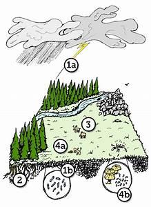 Nitrogen Cycle Diagram For Kids