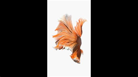 Ios 10 Animated Wallpaper - animated wallpapers iphone best animated iphone x