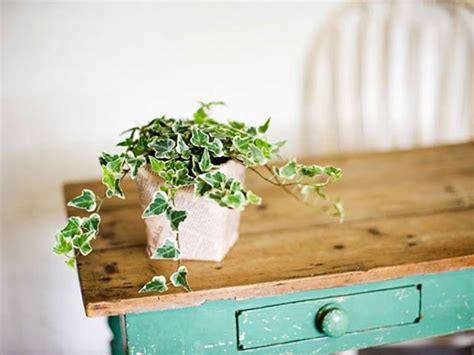 fresh home design  cool  fresh indoor plants