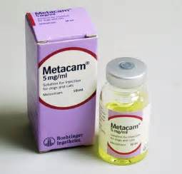 metacam for cats metacam 5mg ml solution for injection for dogs and cats pom