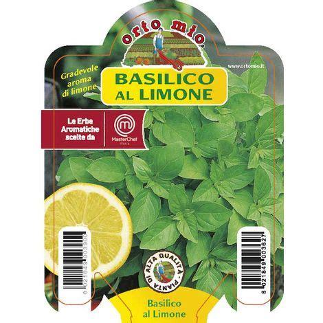 piante di limone in vaso 3 piante in vaso 216 10cm di basilico al limone ortomio orto