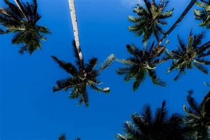 Langit Hijau Gambar Biru Kelapa Pohon Tentang