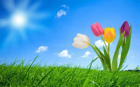 Free Spring Backgrounds #43889 Hd Wallpapers Background