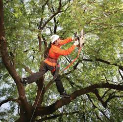 tree doctors arizona tree trimming arizona tree cutting service arizona palm tree trimming