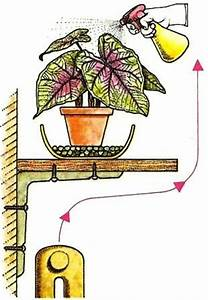 Pflege Von Zimmerpflanzen : temperatur und feuchtigkeit pflege von zimmerpflanzen zimmerpflanzen zimmer und gartenblumen ~ Markanthonyermac.com Haus und Dekorationen