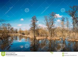 Spring, Nature, Trees, Woods, Standing, In, Water, During, A