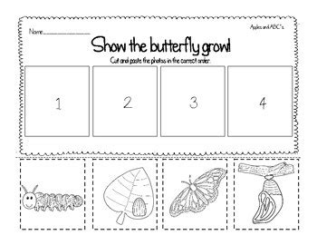 simple cycle of a butterfly 4 stages by lilia 912 | f747dbfe8764d925e3165fbd58a4ea50