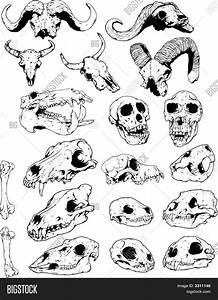 Animal Skull Line Drawing