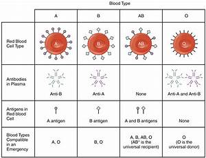 18 6 Blood Typing  U2013 Anatomy And Physiology