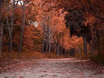 Foliage Trees Autumn Park Standard Wallpaperscraft