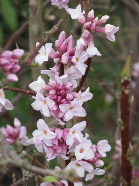 flowering winter shrubs top 10 pretty flowers and shrubs for winter plants
