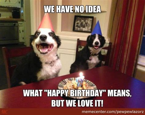 Dog Birthday Memes - funny birthday meme google search birthday pinterest funny birthday meme and google search