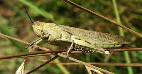 Biologija s Bedenko: Kako dišu kukci?