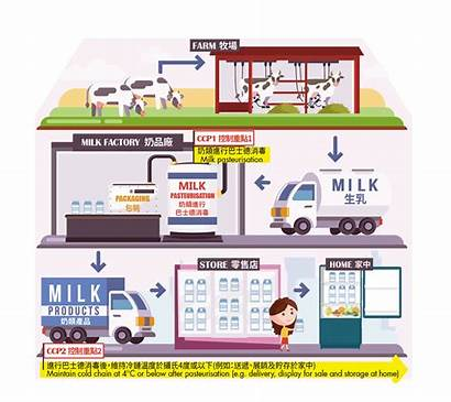 Milk Process Production Points Control Pasteurised Critical