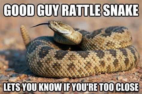 Funny Snake Memes - 25 very funny snake images and photos