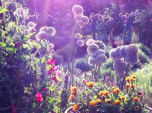 Flower Rugs by Don Giovanni And The Magical Garden Spinning The Light