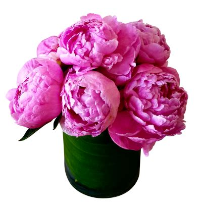 peony  png transparent image  clipart