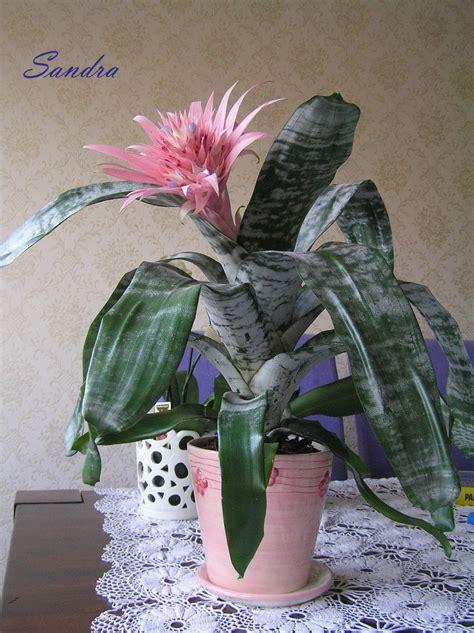 Love lives in the garden...: Skaistās istabas puķes