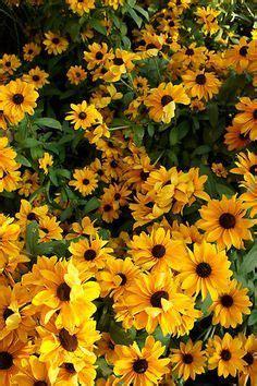 love  flowers    switzerland yellow