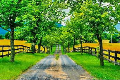 Wallpapers Spring Road Tree Nature Pretty Background