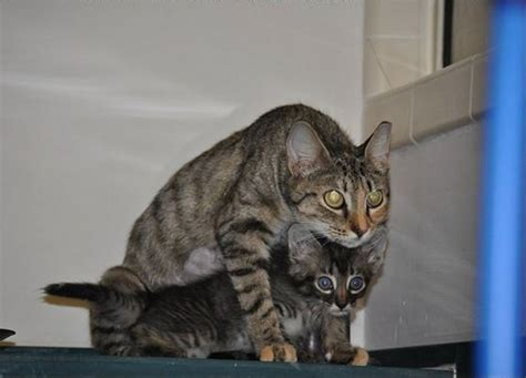 Cat Mama And Son Rescued From The Attic  Love Meow