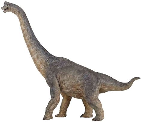 brachiosaurus facts etymology behavior characteristics  adaptation