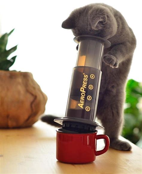 Click the link below to shop our instagram. Working from home with your cat? Dont forget coffee & brew with the AeroPress! Shop Link in Bio ...