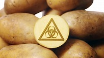 Food Scientists: New GMO Potatoes 'Extremely Worrisome ...