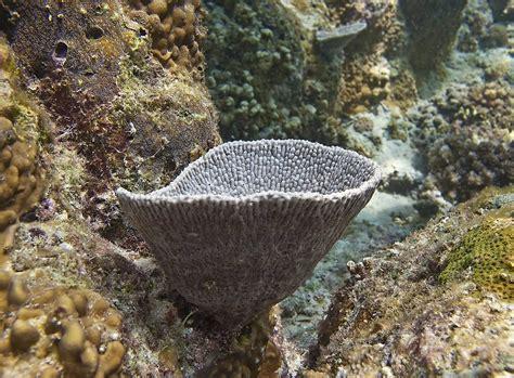 Zoanthid Corals ( Zoas )