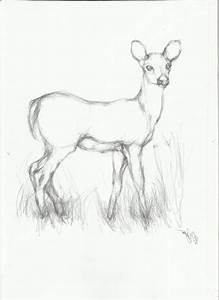 Simple Animal Drawings In Pencil - Drawing Of Sketch
