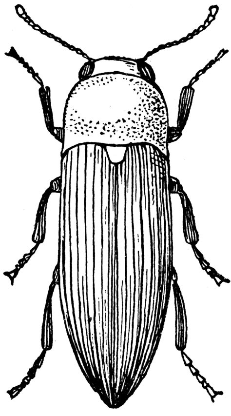 beetle clipart black and white click beetle clipart etc