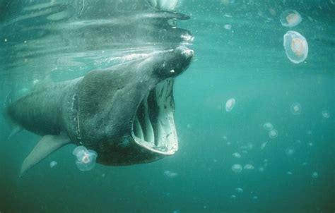 bretagne  nageur percute  requin lors dune traversee