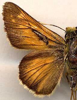 E.Berlov's butterflies collection