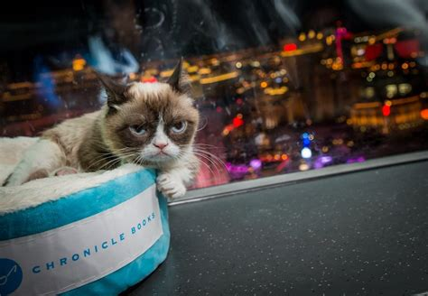 Grumpy Cat Photos Riding The High Roller Observation Wheel