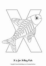 Fish Xray Colouring Preschool Alphabet Crafts Coloring Pages Letter Printable Ray Template Animal Words Animals Sheets Activity Facts Activityvillage Abc sketch template