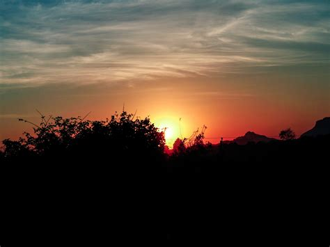 sun rising begin bushes - Free Indian Stock Pictures ...