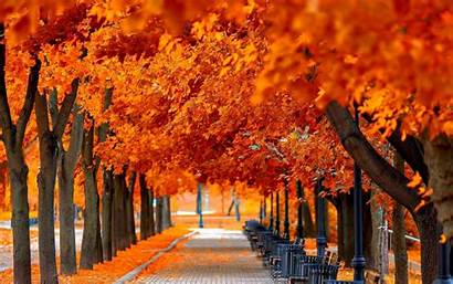 Autumn Leaves Wallpapers Fantastic Backgrounds Downloads